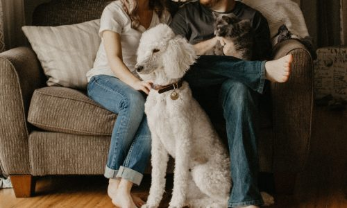Third party pet screening to protect you and your investment